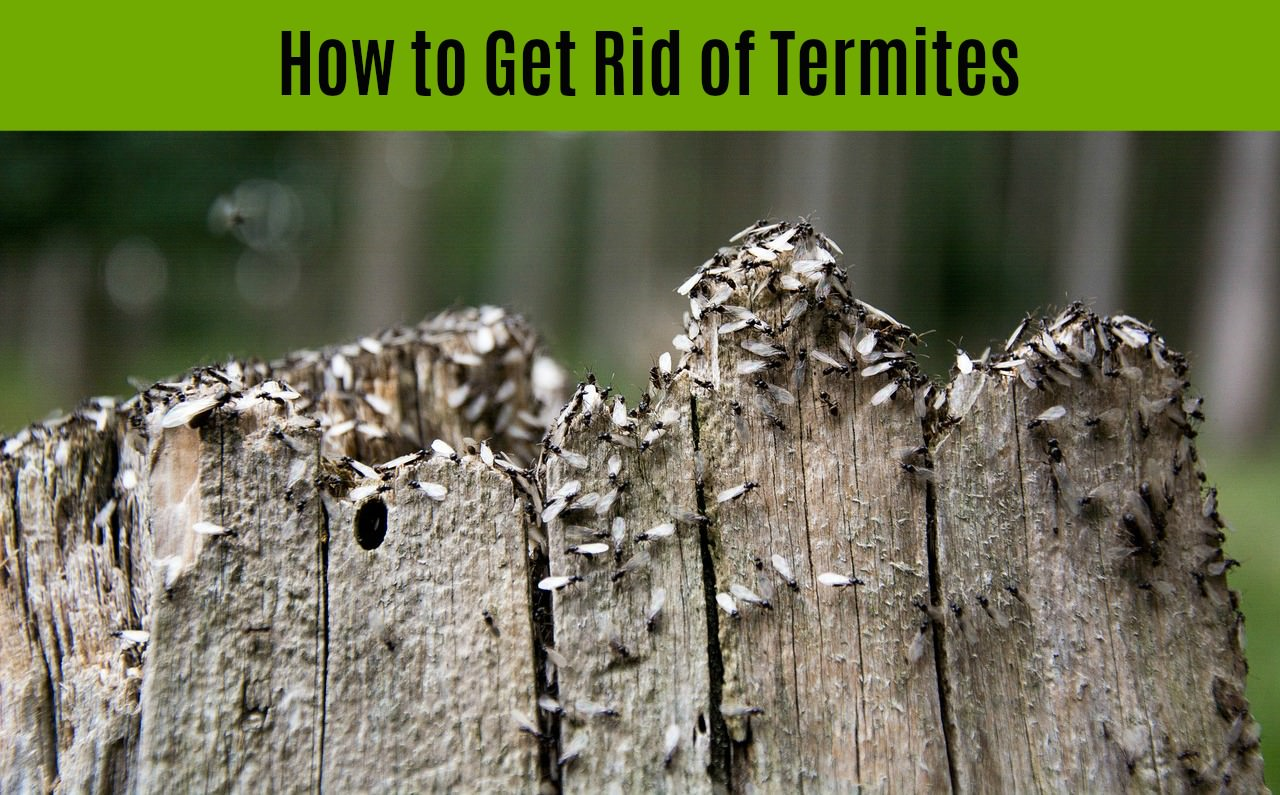 signs of a termite infestation
