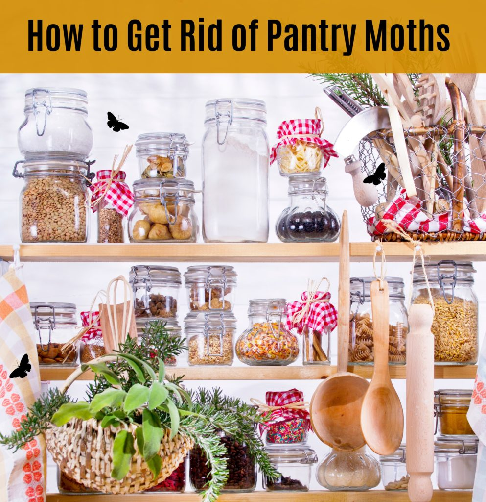 Getting Rid of Moths in the Kitchen - Example of keeping dry goods in air tight containers
