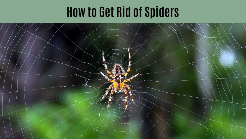 large spider in web - title of picture is How to Get Rid of Spiders